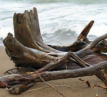 Driftwood At Point Pelee by Barry W  King