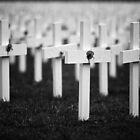 Poppy Fields of Fallen by Peter Denniston