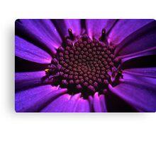Purple summer flower macro Canvas Print
