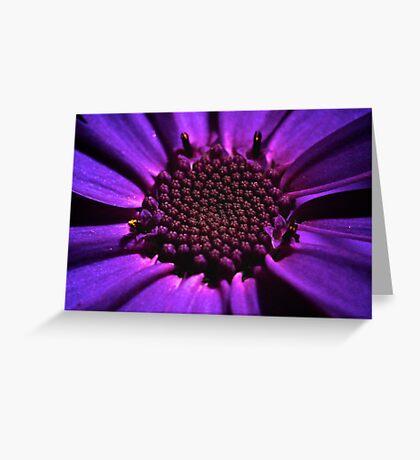 Purple summer flower macro Greeting Card
