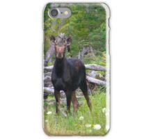 Maine Cow Moose iPhone Case/Skin