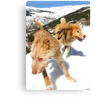 Snow stompin' in the alpujarras, Spain Canvas Print