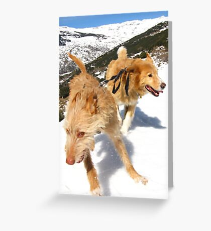 Snow stompin' in the alpujarras, Spain Greeting Card