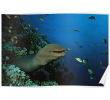 Grinning Moray Eel Poster