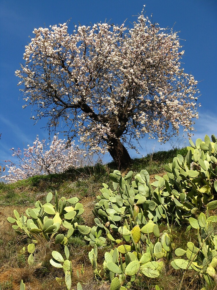 Almonds in the Alpujarras, Spain by Fin Gypsy