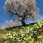 Almonds in the Alpujarras, Spain by Fin Gypsy