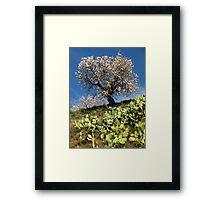 Almonds in the Alpujarras, Spain Framed Print