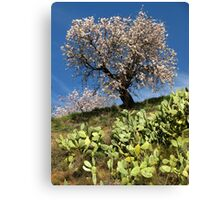 Almonds in the Alpujarras, Spain Canvas Print