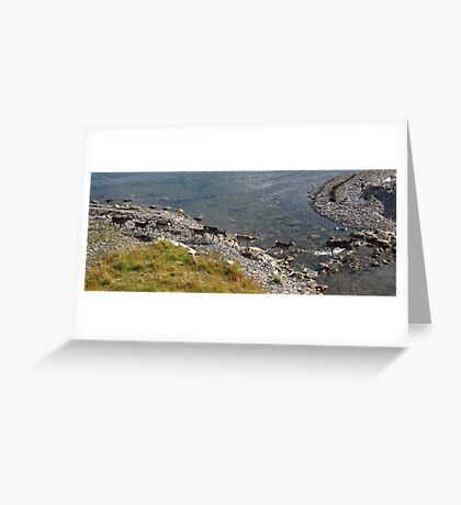 Arctic Splash, Norway Greeting Card