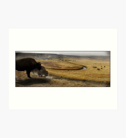 Bison Rut Art Print
