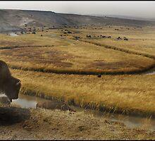 Bison Rut by Christopher Barker