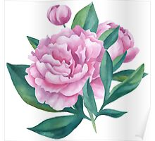 Watercolor Peony Bouquet Poster