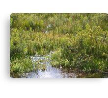Sunny Stream Borders Canvas Print