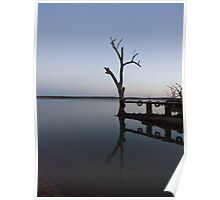 Dead tree offers a home for birds. Lake Wyangun  Poster