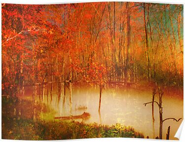 Misty Forest by Pamela Phelps