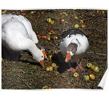 Geese and Apples Poster