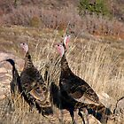Wild Turkeys by Jan  Tribe