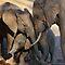 Excellent Elephants Challenge