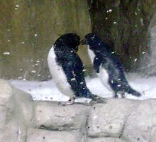 Penguin Kiss by AbbieWest
