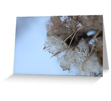 Winter Hydrangea  - JUSTART © Greeting Card