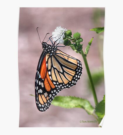 Monarch Butterfly HDR Poster
