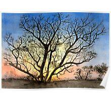 Natures Backlight Poster