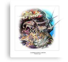 CARIBBEAN SPINY LOBSTER 5 Canvas Print