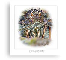 CARIBBEAN SPINY LOBSTER 7 Canvas Print