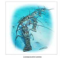 CARIBBEAN SPINY LOBSTER 8 by DilettantO