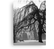 Weeping Willow in Winter Canvas Print