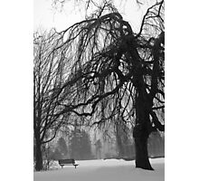 Weeping Willow in Winter Photographic Print
