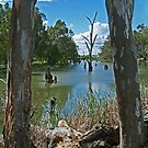 Campaspe River,Elmore by Joe Mortelliti