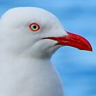 Seagull Close Up by juellie