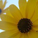 Wildflower by Wendella Reeves