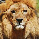 Lion Staredown by Walt Conklin