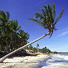 White-sand Beach with Palm Trees, Mui Ne (Vietnam)  by Petr Svarc