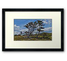 Taylor Head Trees Framed Print