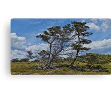 Taylor Head Trees Canvas Print