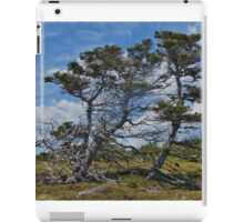 Taylor Head Trees iPad Case/Skin