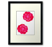 Two pink roses Framed Print