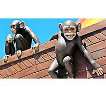 Noah's Chimps Photographic Print