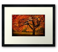 Red Oak Tree Framed Print