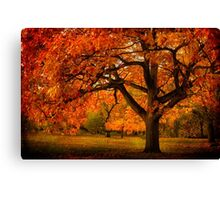 Red Oak Tree Canvas Print