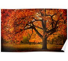 Red Oak Tree Poster