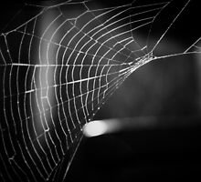 Wicked Web of Deceit by Mike Weeks