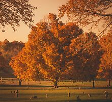 Fall Tree by Lindsay Osborne