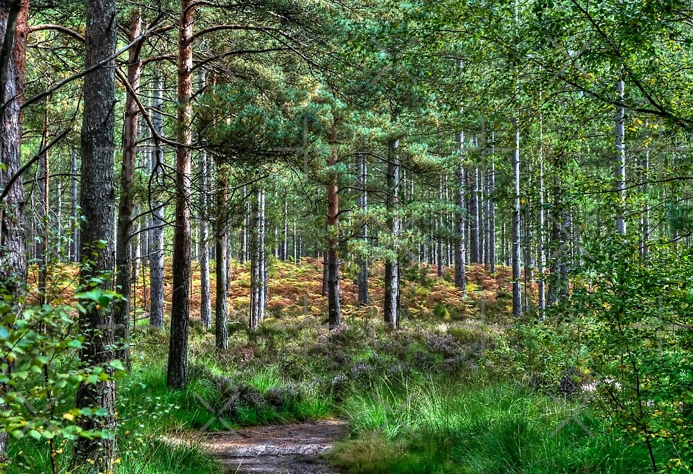 Forest Walk in the New Forest, Hampshire, England by Skye Ryan-Evans