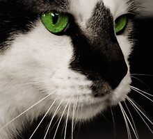 Green Eyed Monster by Alissa Brunskill