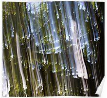 Raining Light Through the Trees Poster