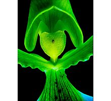 Lover Boy - A new perspective on Orchid Life Photographic Print